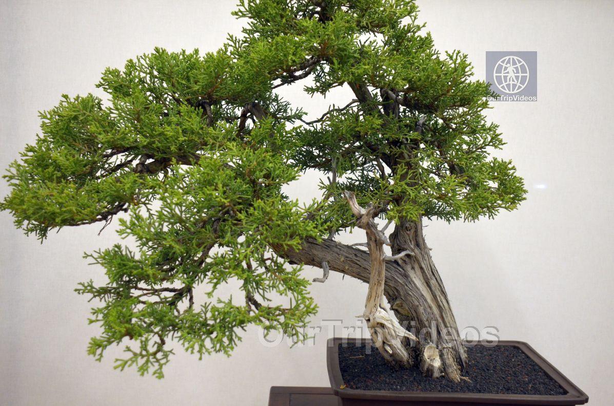 Annual Bonsai Exhibition, Union City, CA, USA - Picture 48 of 50