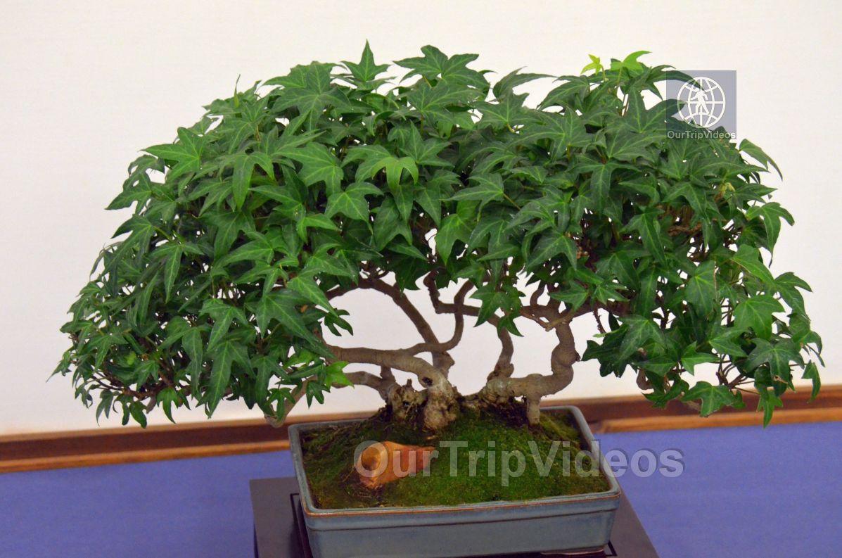 Annual Bonsai Exhibition, Union City, CA, USA - Picture 51 of 75