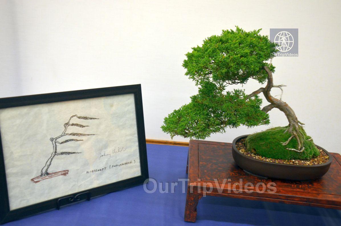 Annual Bonsai Exhibition, Union City, CA, USA - Picture 56 of 75