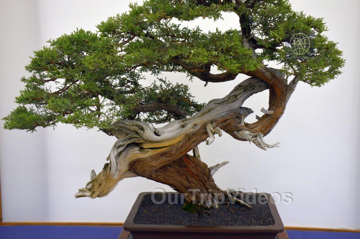 Annual Bonsai Exhibition, Union City, CA, USA - Picture 59 of 75