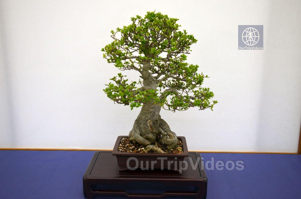Annual Bonsai Exhibition, Union City, CA, USA - Picture 60 of 75