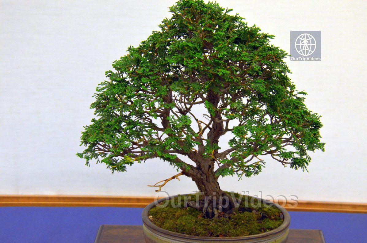 Annual Bonsai Exhibition, Union City, CA, USA - Picture 61 of 75