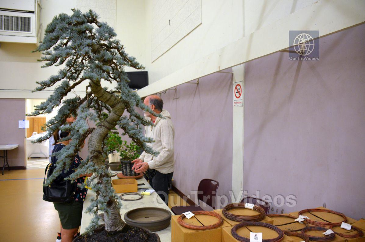 Annual Bonsai Exhibition, Union City, CA, USA - Picture 64 of 75
