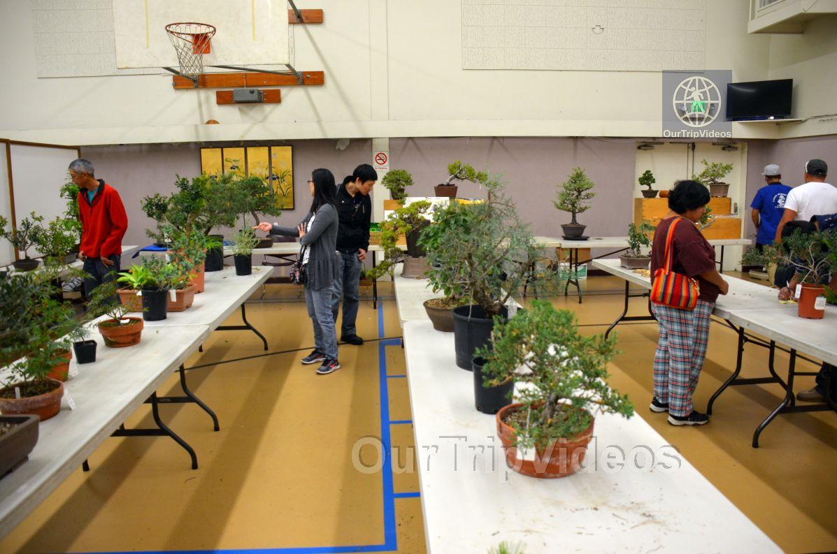 Annual Bonsai Exhibition, Union City, CA, USA - Picture 65 of 75