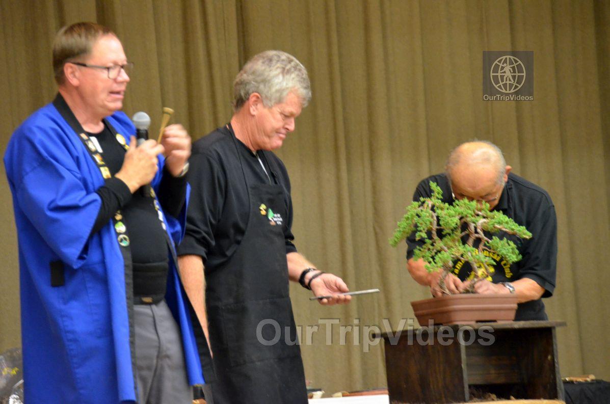 Annual Bonsai Exhibition, Union City, CA, USA - Picture 70 of 75