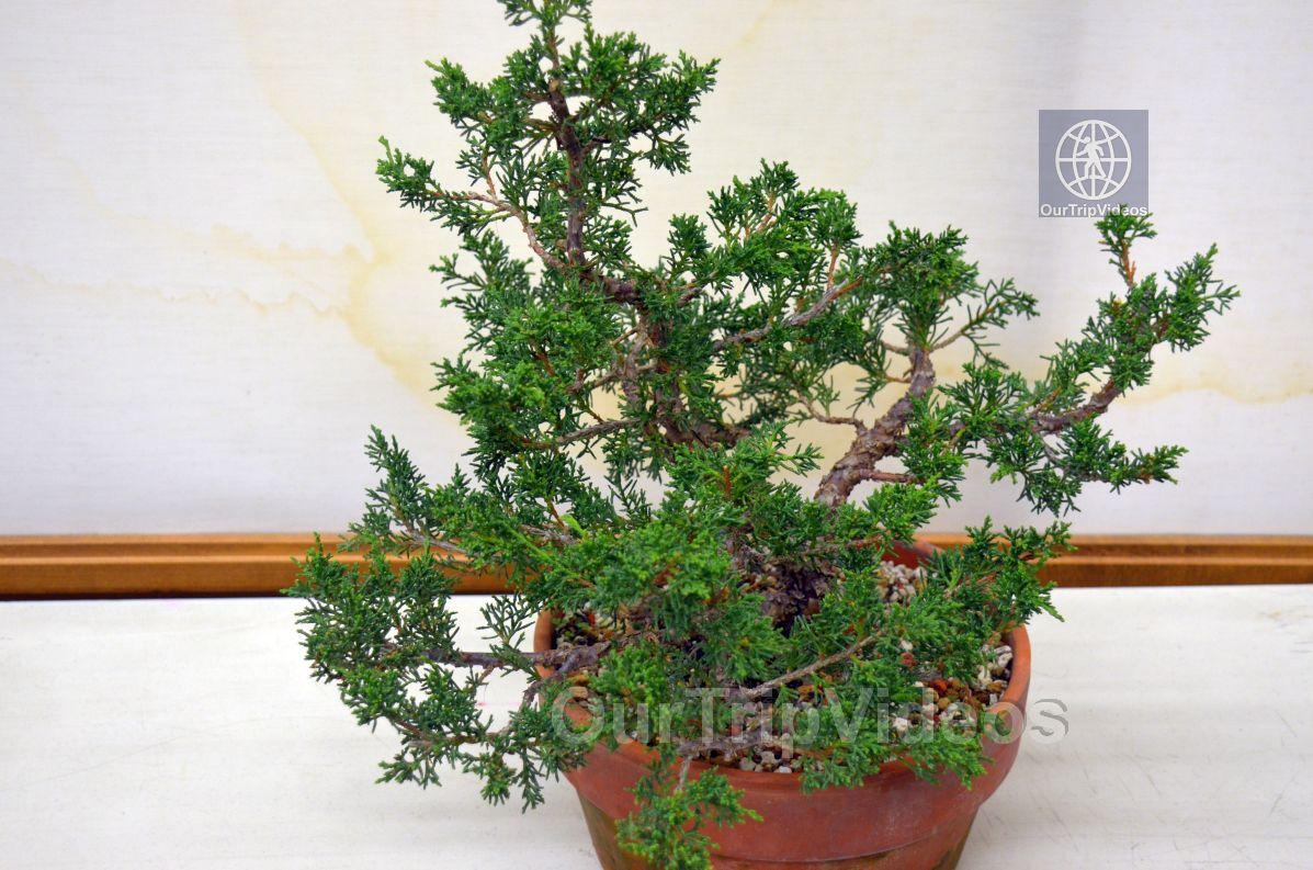 Annual Bonsai Exhibition, Union City, CA, USA - Picture 72 of 75