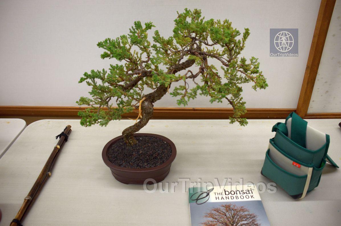 Annual Bonsai Exhibition, Union City, CA, USA - Picture 73 of 75