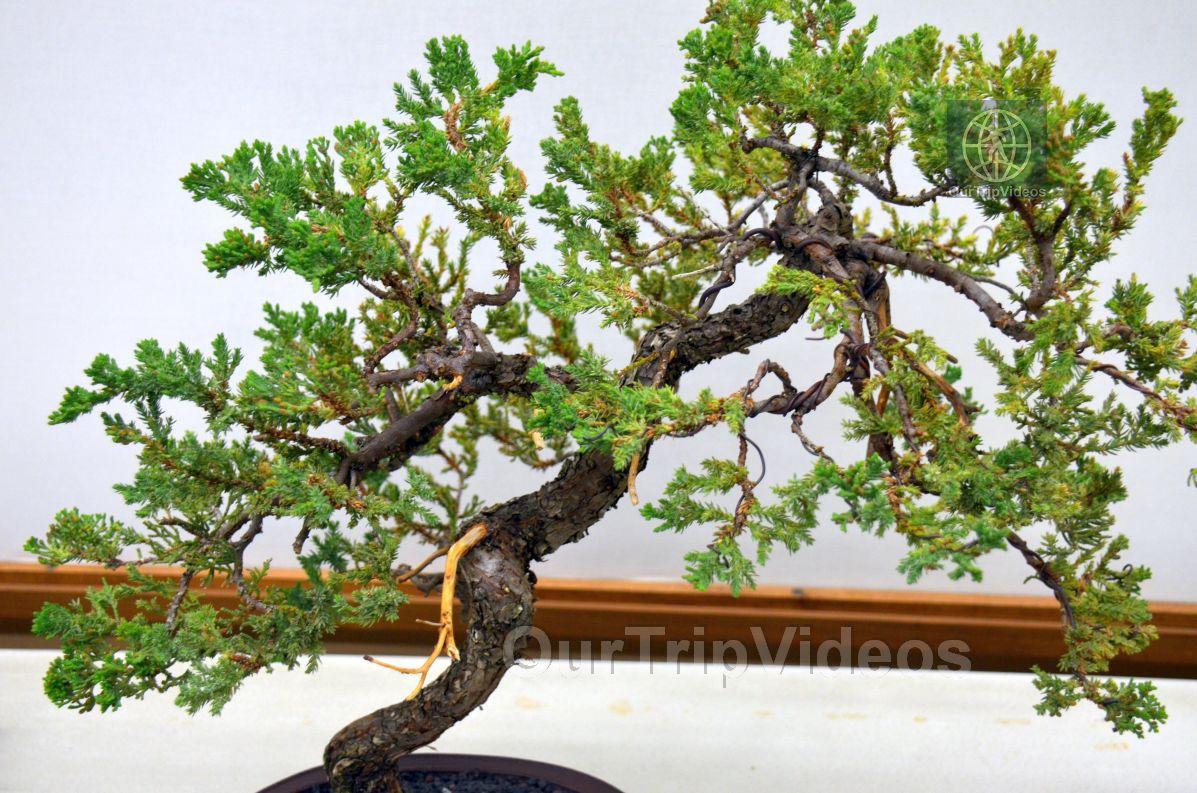 Annual Bonsai Exhibition, Union City, CA, USA - Picture 74 of 75