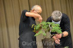 Annual Bonsai Exhibition, Union City, CA, USA - Picture 2