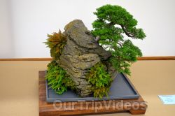 Annual Bonsai Exhibition, Union City, CA, USA - Picture 14