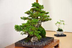 Annual Bonsai Exhibition, Union City, CA, USA - Picture 40