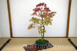 Annual Bonsai Exhibition, Union City, CA, USA - Picture 42