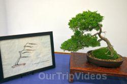Annual Bonsai Exhibition, Union City, CA, USA - Picture 56