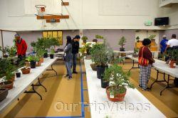 Annual Bonsai Exhibition, Union City, CA, USA - Picture 65