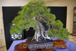 Annual Bonsai Exhibition, Union City, CA, USA - Picture 71