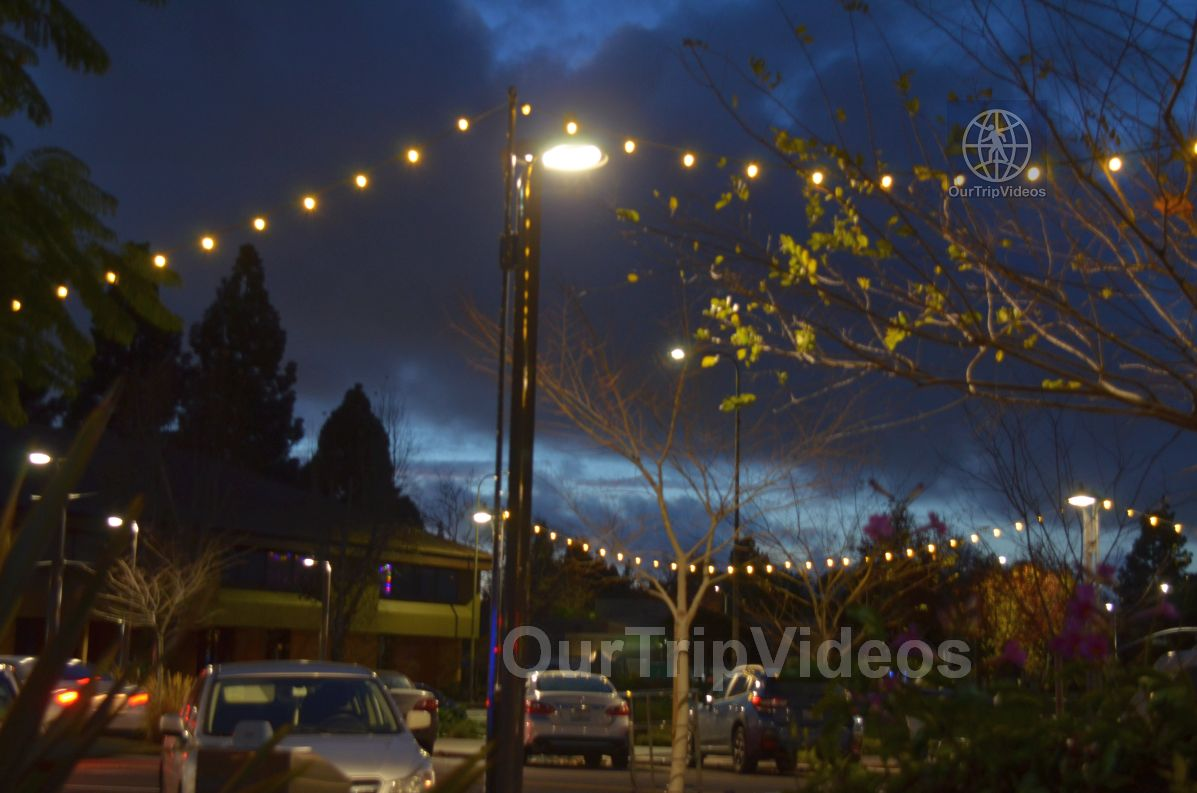 Annual Chanukah Lighting - Menorah of Warmth, Fremont, CA, USA - Picture 56 of 75