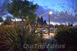 Annual Chanukah Lighting - Menorah of Warmth, Fremont, CA, USA - Picture 53